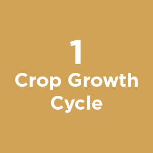 Crop Growth Cycle