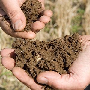 soil tablepsd