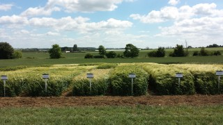 Barley-trials-at-Wansford-1