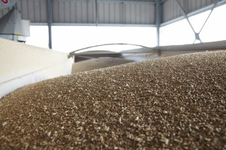 Grain-2