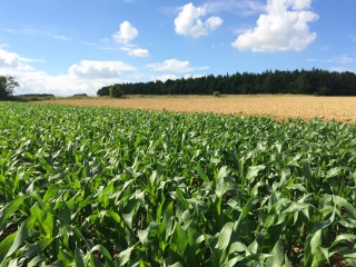 Soundborough-maize-views-3