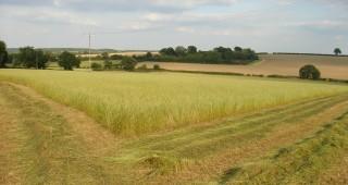 Standing-Grass-Fieldcropped