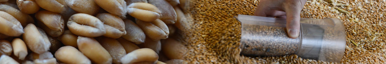 Grain sampling WEB