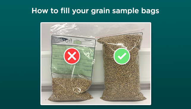 How to fill grain bags 1