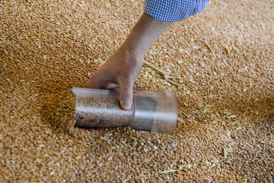 grain sampling small