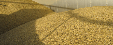 grain-image