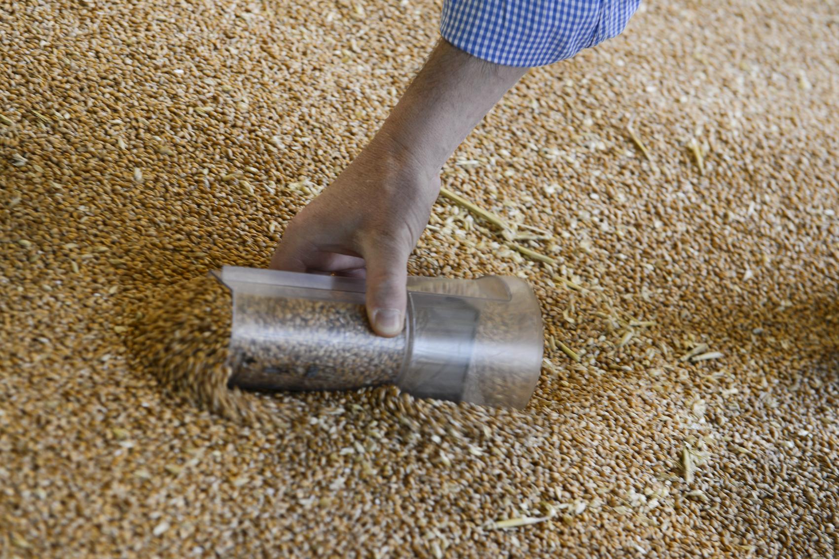 grain-sampling